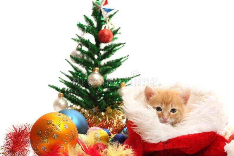 Kleine Kätzchen- und Weihnachtsverzierungen stockbilder