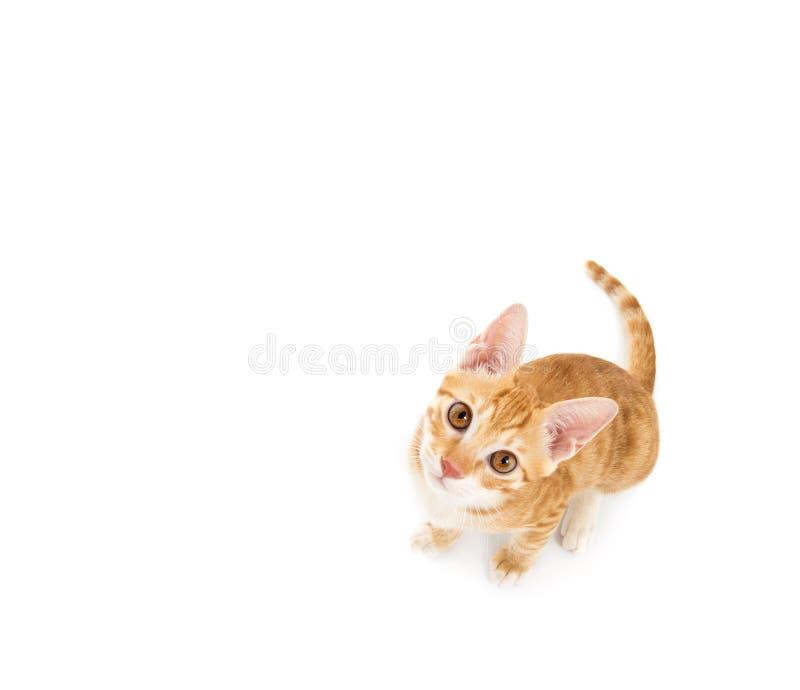 Kleine kat die omhoog eruit zien stock fotografie
