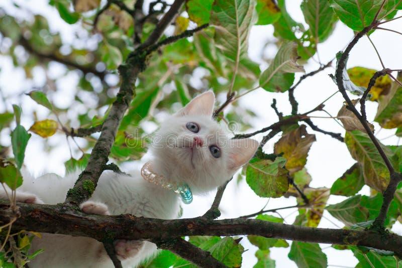 Kleine kat op boomclose-up royalty-vrije stock foto's