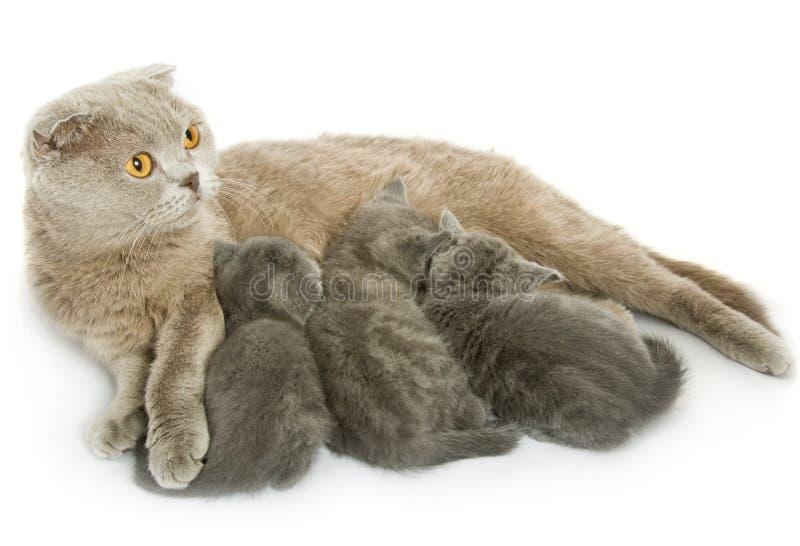 Kleine katjes en moeder-kat royalty-vrije stock foto's