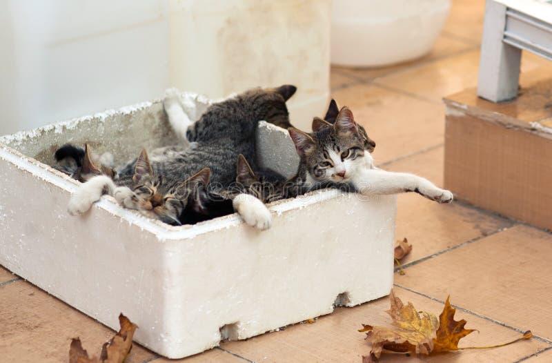 Kleine katjesslaap buiten in een doos Dakloze dieren stock foto