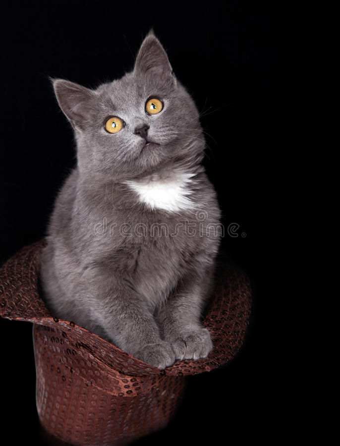 Kleine katjeszitting in een GLB royalty-vrije stock fotografie