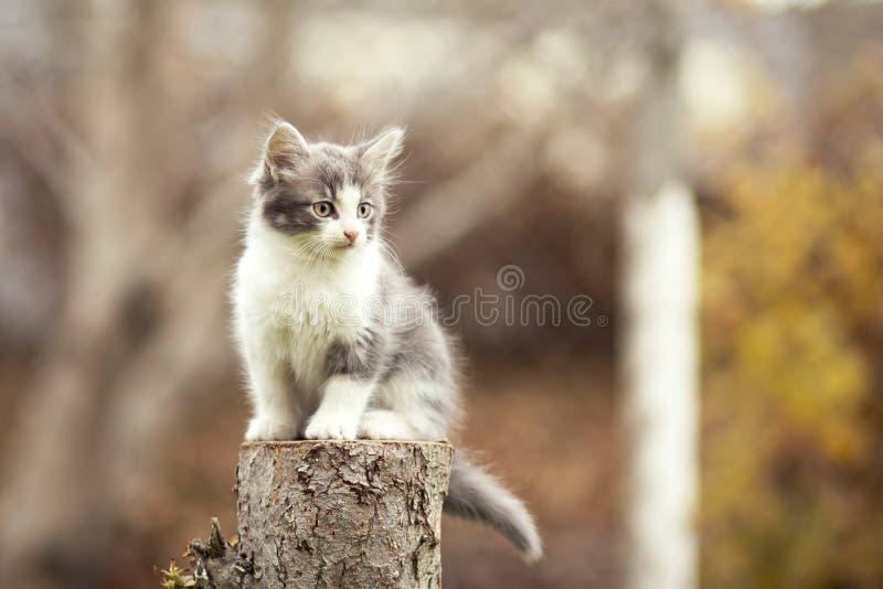 Kleine katjeszitting op een stomp stock afbeeldingen