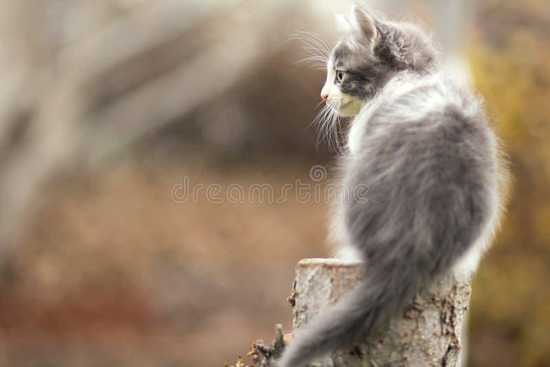 Kleine katjeszitting op een stomp stock fotografie