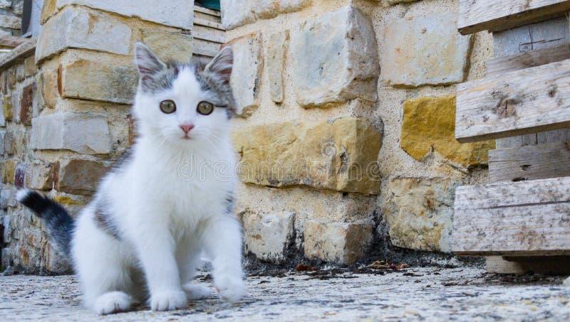 Kleine Katze beim Spielen stockfoto