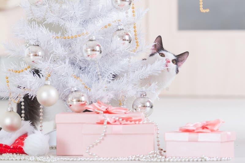 Kleine Katze, die mit Weihnachtsbaumschmucken spielt lizenzfreie stockfotografie