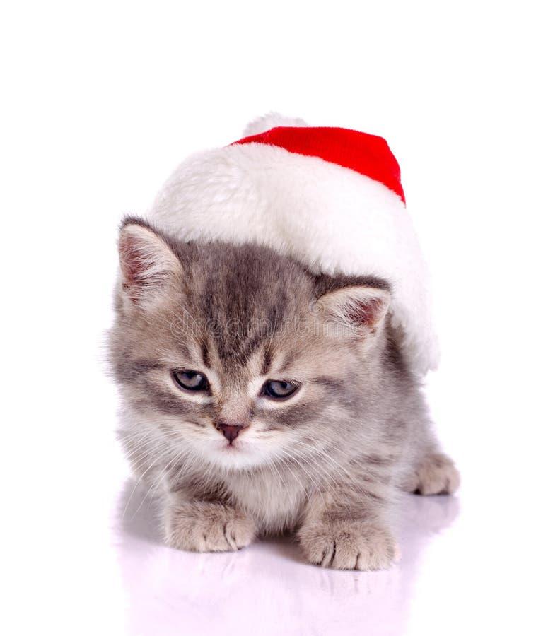 Kleine Katze, die Weihnachten feiert lizenzfreie stockbilder