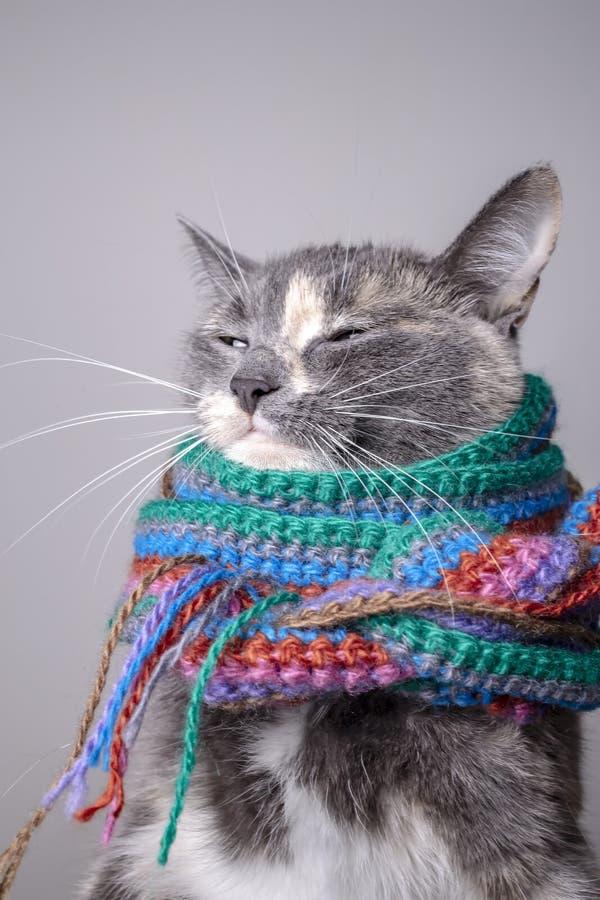 Kleine Katze mit einem schlauen Blick vorbereitet für Winter und in einem woolen, gestrickten Schal, auf einem grauen Hintergrund stockfotos