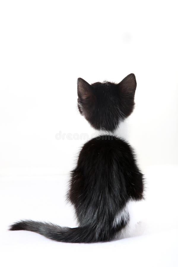 Kleine Katze von hinten gegen einen weißen Hintergrund stockfotos