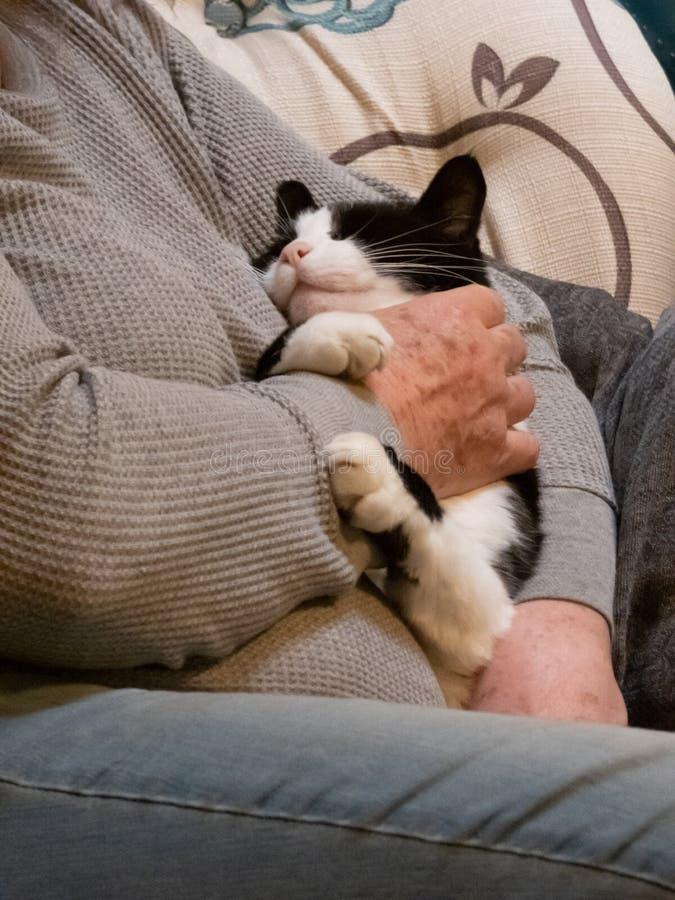 Kleine Katzenumarmungen alterten die Hände der Frau es streichelnd lizenzfreie stockbilder