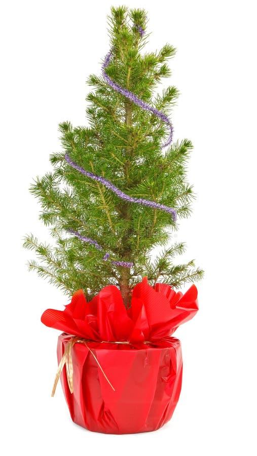 Kleine Kerstmisboom in decoratieve pot royalty-vrije stock afbeelding