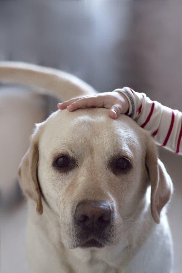 Kleine Kinder und große Hunde lizenzfreie stockfotos