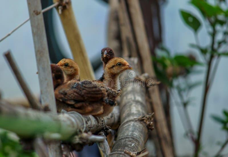 Kleine kippen stock afbeeldingen