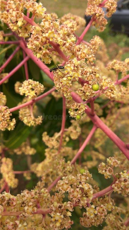 Kleine kleine Blumen stockbilder