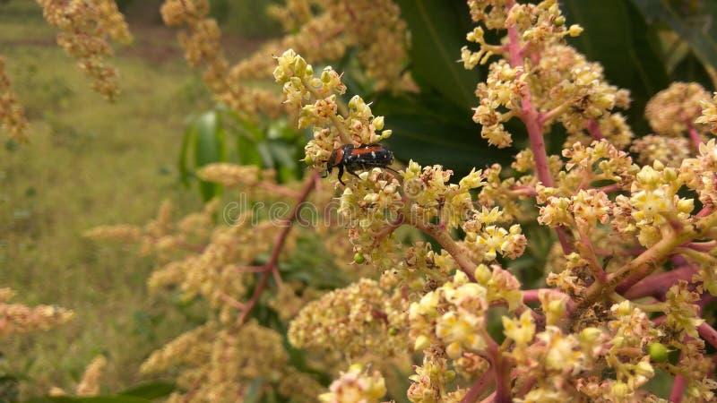 Kleine kleine Blumen stockfoto