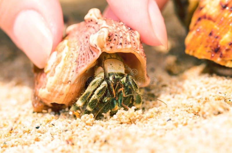 Kleine Krabbe auf weißem Sand des sonnigen Strandes Wenig Einsiedlerkrebsmakrofoto stockfotos