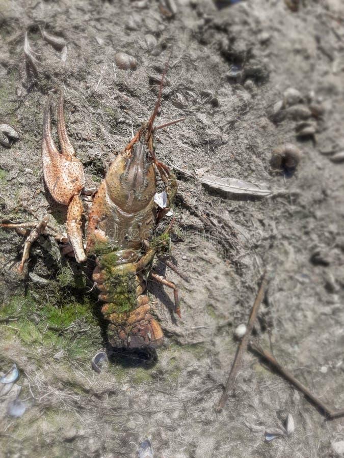 Kleine Krabbe am Strand lizenzfreie stockfotografie