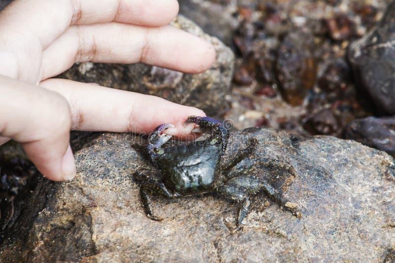 Kleine krabben die vingers van kinderen vastklemmen royalty-vrije stock foto's