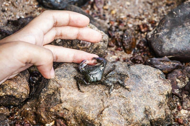 Kleine krabben die vingers van kinderen vastklemmen stock foto's