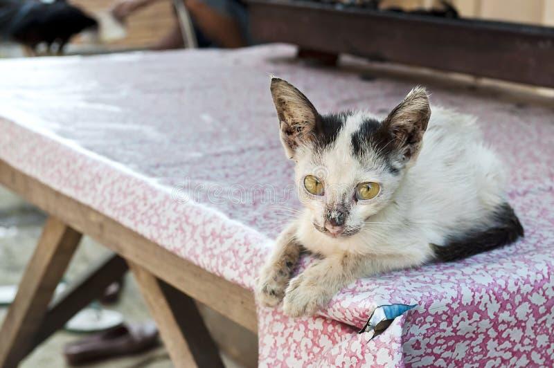 Kleine kranke Katze auf einer Tabelle lizenzfreies stockbild