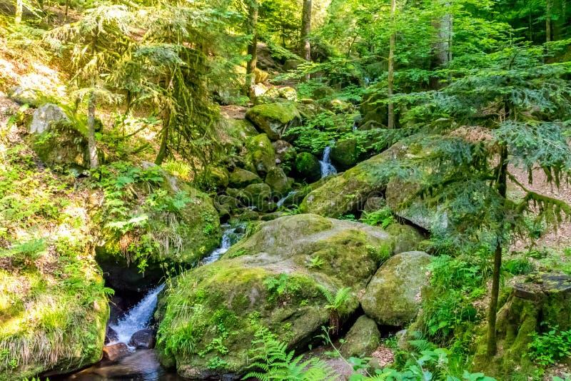 Kleine kreek met van de steenbed en waterval stappen in het bos stock foto's