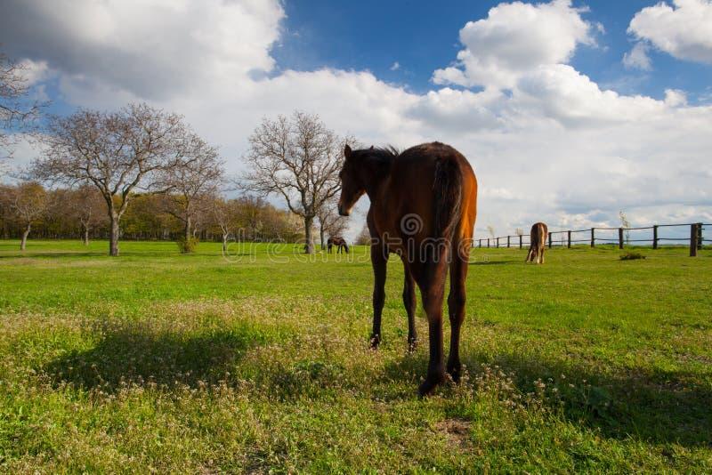 Kleine kudde van paarden op de lenteweiland stock fotografie