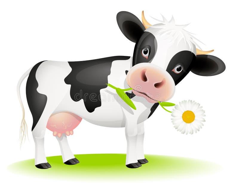 Kleine Kuh, die Gänseblümchen isst lizenzfreie abbildung