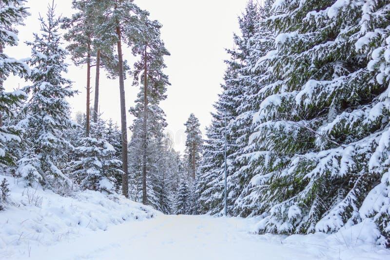 Kleine Landstraße im Winter - Schweden stockbilder