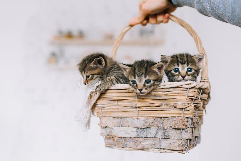 Kleine leuke gestreepte katjes stock foto