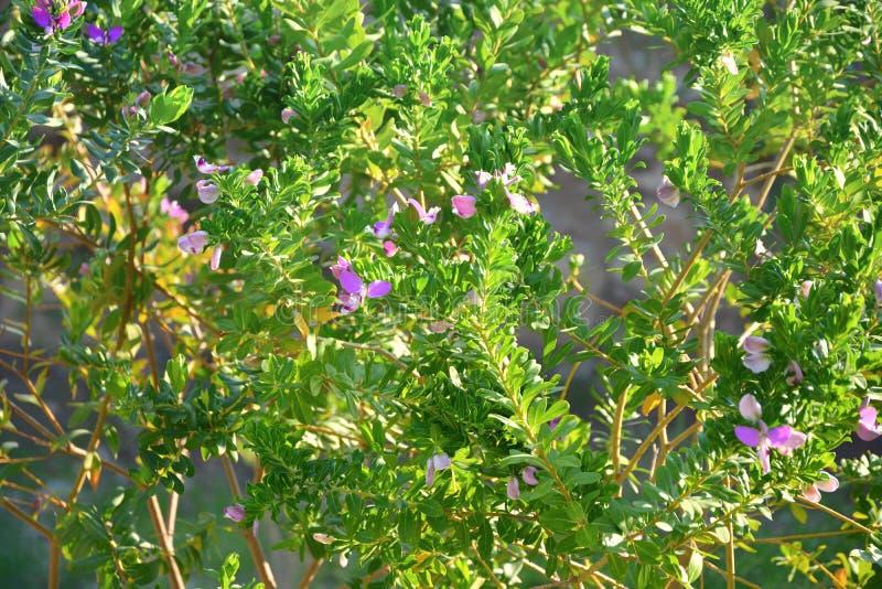 Kleine lila Blumen auf dem grünen Baum lizenzfreie stockfotografie