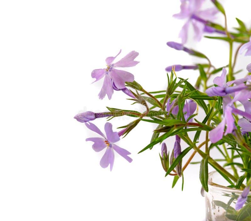 Kleine Lila Blumen Auf Einem Lichtweiß Stockbild - Bild von kraut ...
