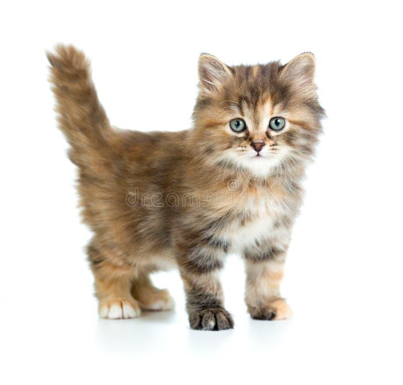Kleine lustige Katze lokalisiert auf Weiß lizenzfreie stockbilder
