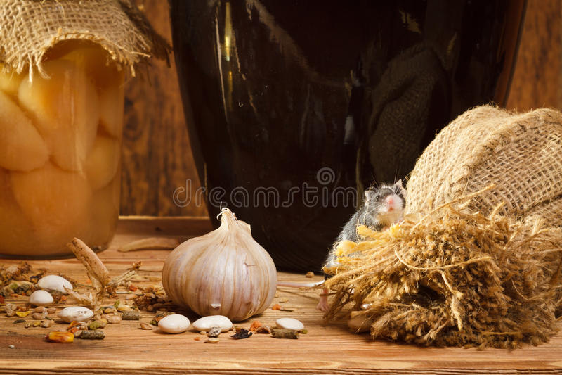 Kleine Maus im Keller mit garlik stockfoto