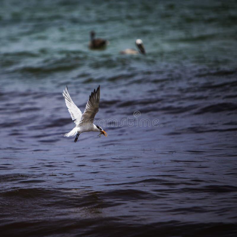 Kleine Meeuwvogel royalty-vrije stock afbeeldingen