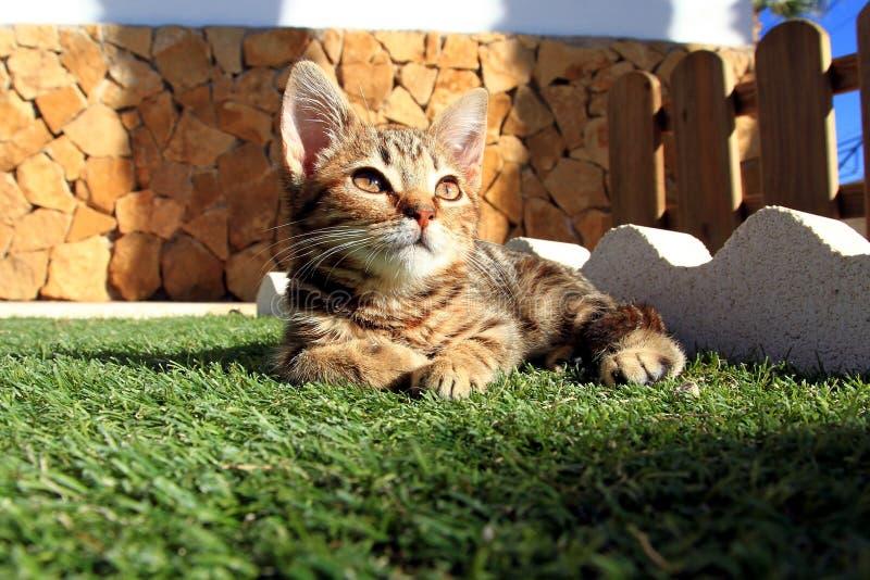Kleine Miezekatze im Garten stockbilder
