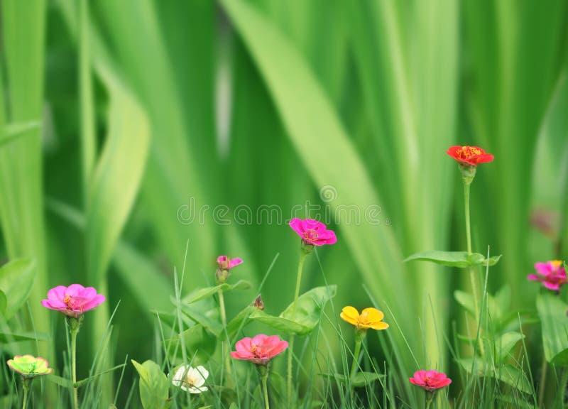 Kleine mooie bloemen in de tuin stock fotografie