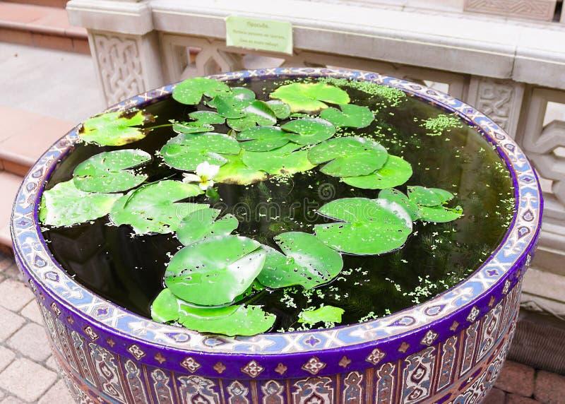 Kleine mooie vijver met groene bladeren van waterlelies stock foto's