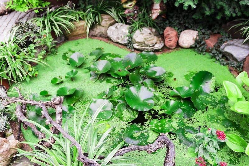 Kleine mooie vijver met groene bladeren van waterlelies royalty-vrije stock afbeeldingen