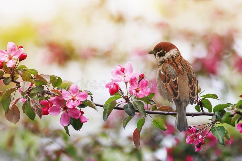 Kleine mousserende vogels zitten op een tak met roze bloemen van een appelboom in een zonnige tuin van mei royalty-vrije stock afbeelding