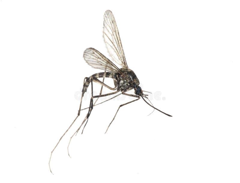 Kleine mug die op wit wordt geïsoleerdr royalty-vrije stock foto