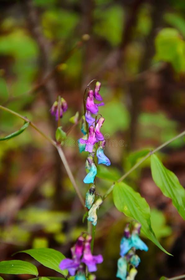 Kleine, multicolored bosbloemen, met dauwdalingen royalty-vrije stock afbeelding