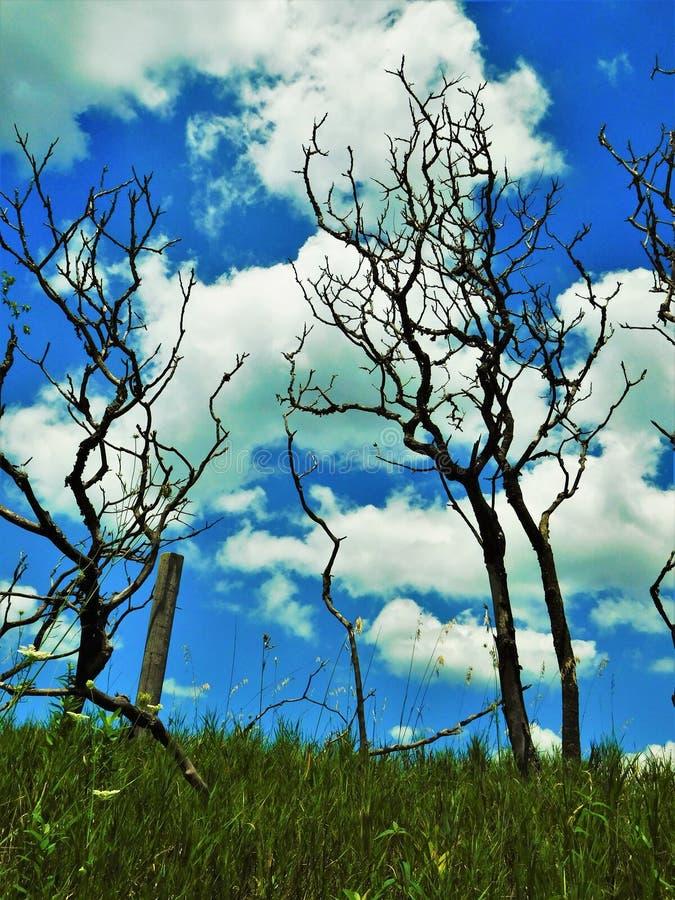 Kleine naakte bomen royalty-vrije stock afbeeldingen
