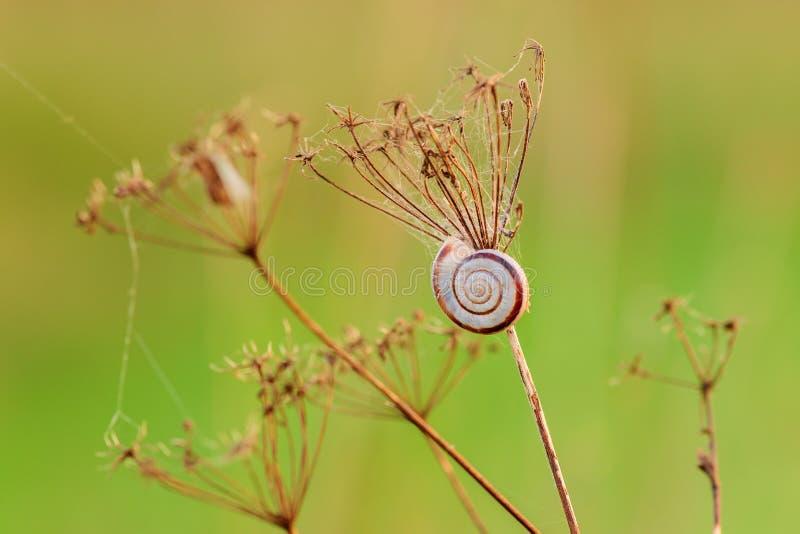 Kleine naaktslak op droog die gras door zonsondergang wordt verlicht - close-up stock foto