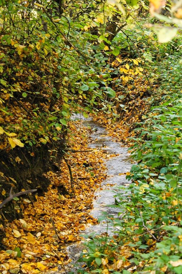 Kleine Natur des Stromes im Frühjahr lizenzfreie stockfotografie