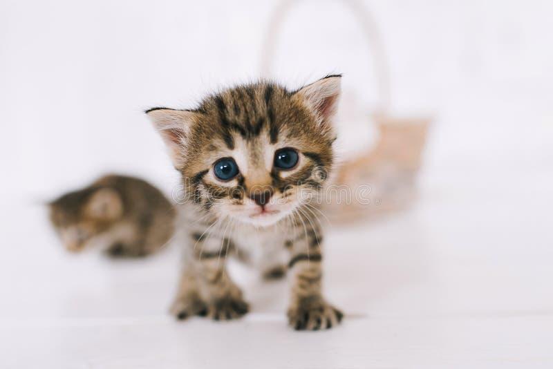 Kleine nette gestreifte Kätzchen lizenzfreie stockfotos