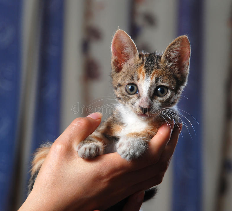 Kleine nette Katze lizenzfreie stockbilder