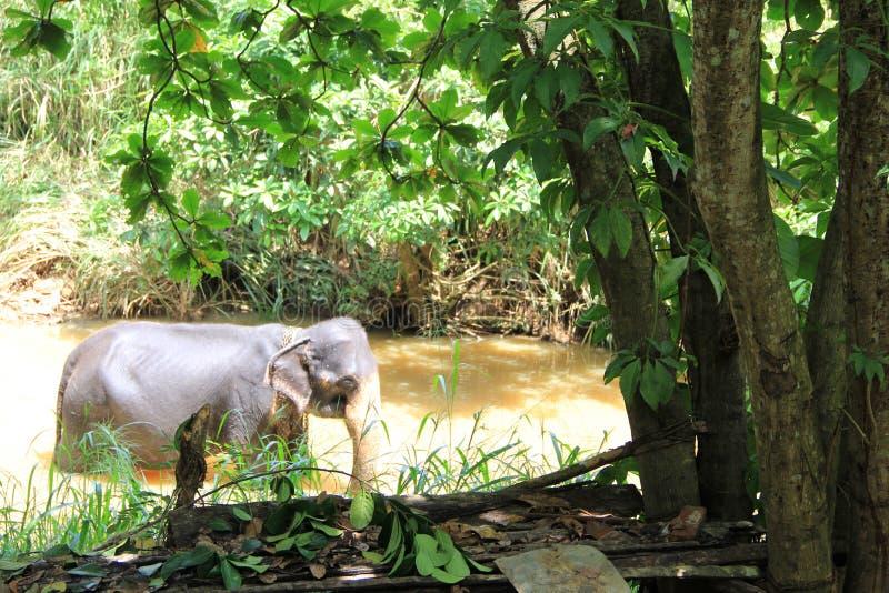 Kleine olifanten in vijver Sri Lanka royalty-vrije stock foto