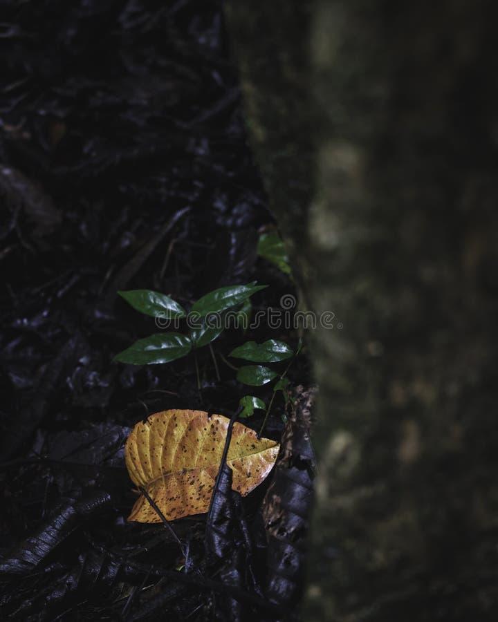 Kleine orange und grüne Blätter nahe bei einem Stamm lizenzfreie stockbilder
