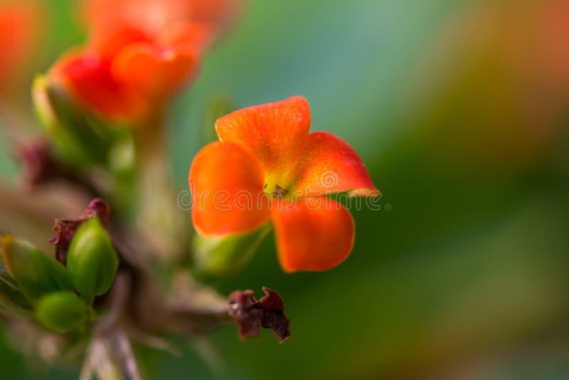 Kleine oranje bloesem op de groene achtergrond stock foto's