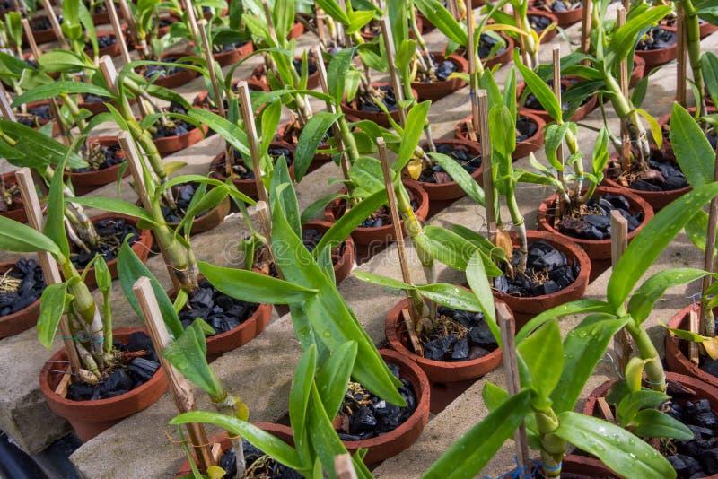 Kleine orchideebloemen in de pottentuin in de serre royalty-vrije stock foto's